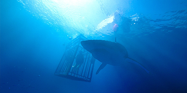 47 Meters Down - Szenenbild